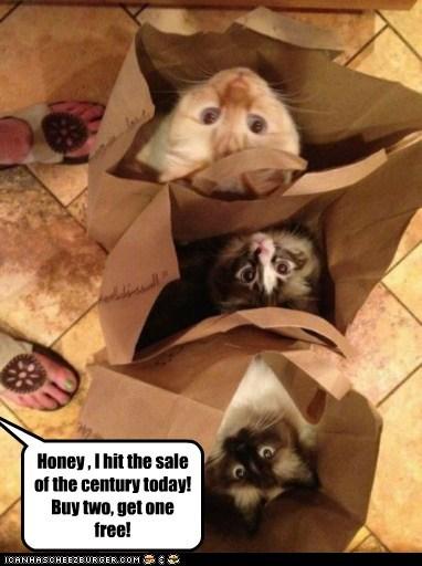 bag buy captions Cats free sale - 6495251456
