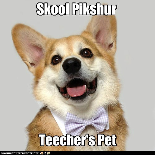 bowties corgi dogs school picture teachers-pet