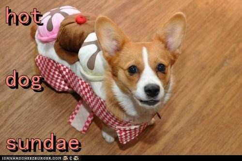 corgi,costume,dogs,hot dog,ice cream,sundae