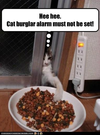 captions Cats kibble thief - 6496287744