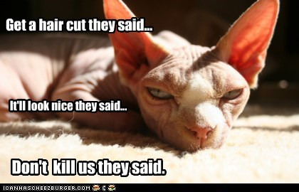 captions Cats hair hair cut kill murder nice - 6496308480