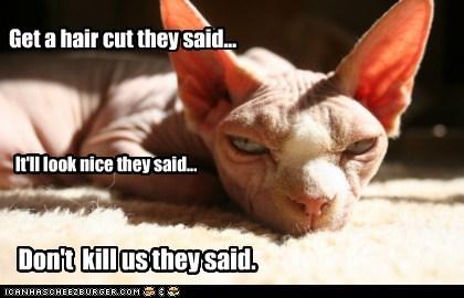 captions Cats hair hair cut kill murder nice - 6496308480