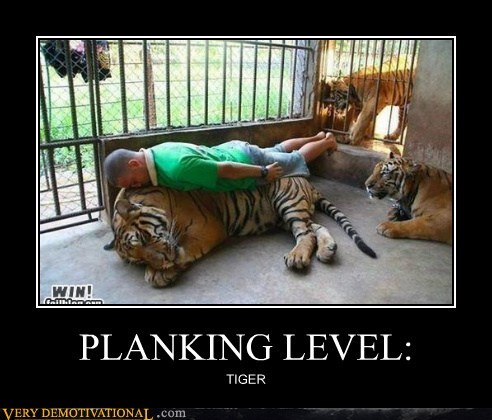 crazy Planking Terrifying tiger wtf