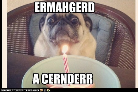 birthday,candle,derp,dogs,Ermahgerd,goggie