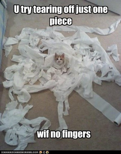 captions,Cats,fingers,thumb,toilet,toilet paper
