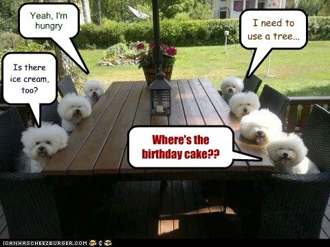 birthday party,cake,captions,dogs,ice cream,Party,table,what breed