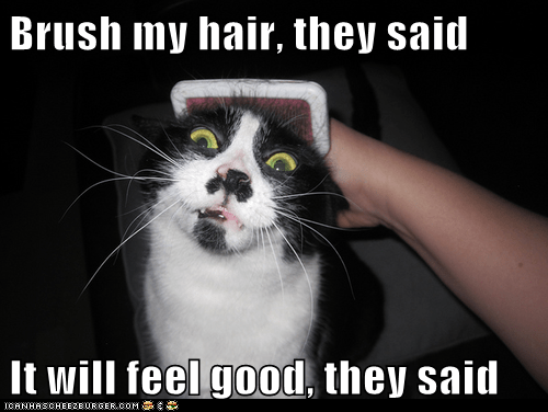 brush,captions,Cats,Feels Good Man,fur,hair,ouch