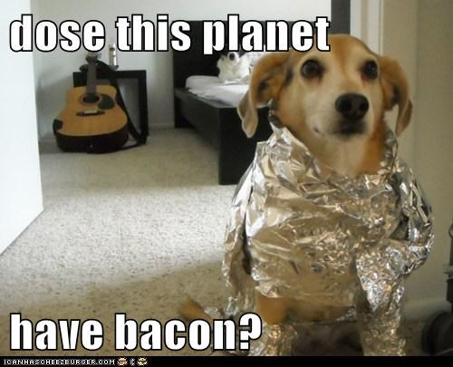 alien bacon captions dogs lab space space dog tinfoil