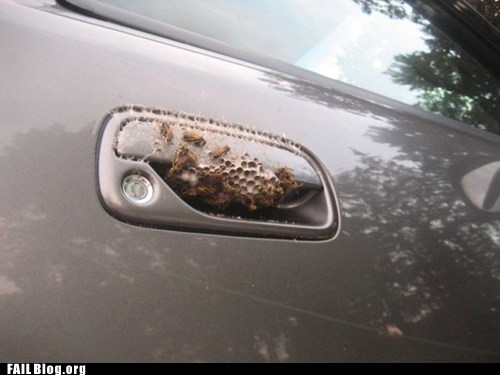 bees,car door,nest