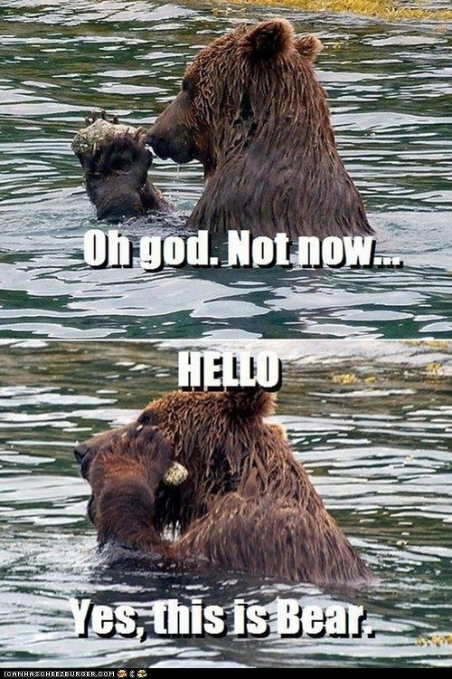 bears captions hello hello yes this is dog Memes phones rocks - 6497572352