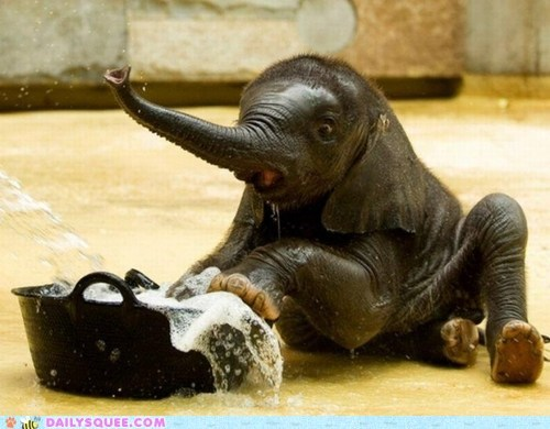 baby,trunk,bath time,elephant,splash,mess,squee