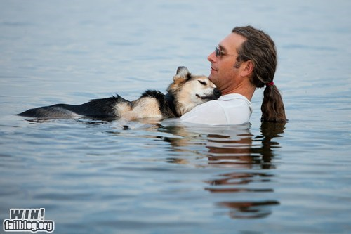 cute dogs friend photography swimming - 6497682944