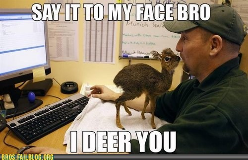 animals,come at me bro,deer,manimals,pun