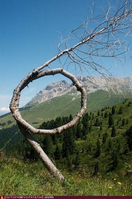 loop,nature,tree