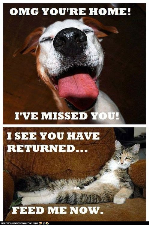 captions Cats differences dogs feed me i missed you missing multipanel