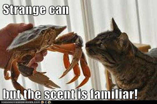 cat,crab,dinner,familiar,food,scent,sniffing,strange