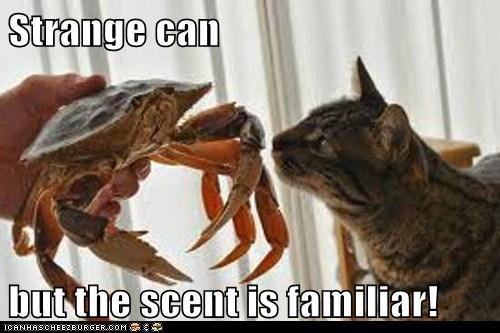 cat crab dinner familiar food scent sniffing strange - 6497796608
