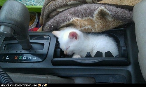 cars Cats cyoot kitteh of teh day driving gear shift kitten sleeping tiny