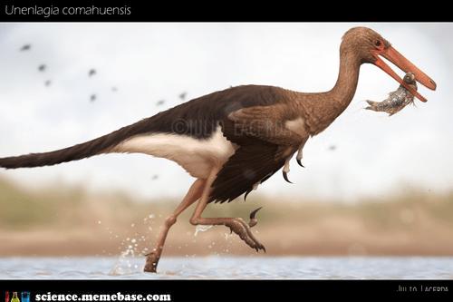 dinosaur hunt Life Sciences unenlagia comahuensis