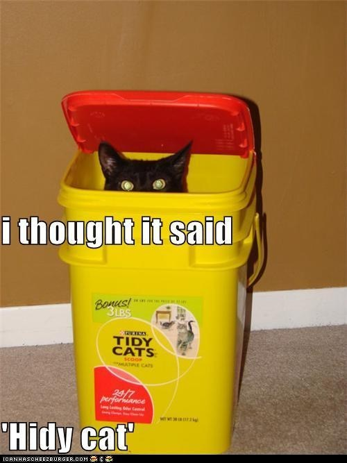 captions,Cats,classic,classics,hide,litter,tidy cat