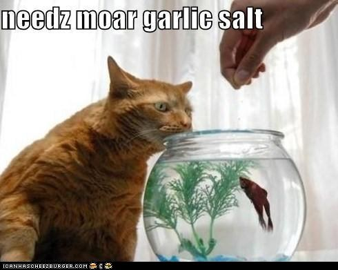 captions Cats classic classics fish garlic salt seasoning - 6497942272