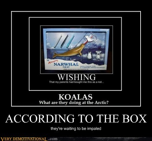 box,hilarious,impaled,narwhal
