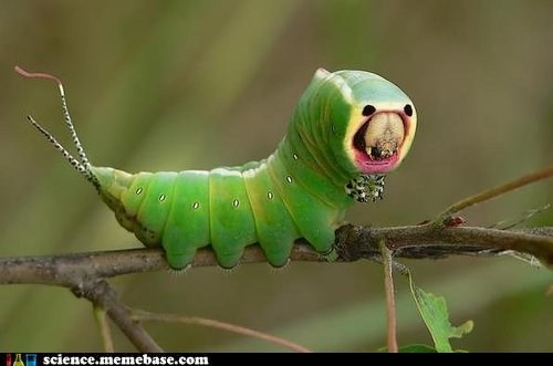 caterpillar,creepy,Life Sciences,parasa indetermina