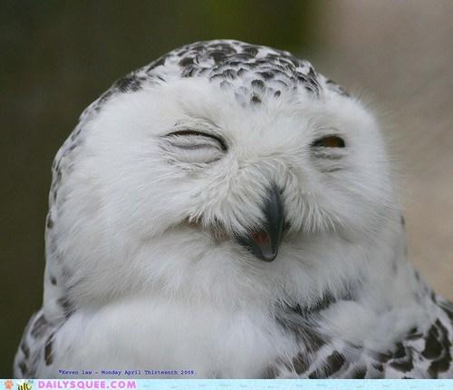 bird Owl smile snowy owl squee spree - 6498007808