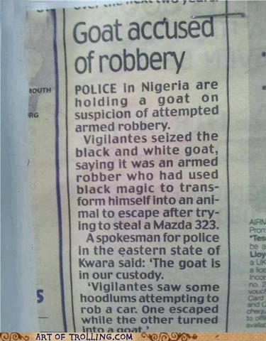 africa goat IRL news robbery - 6498103296