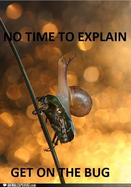 beetle,fast,get on,no time to explain,snail