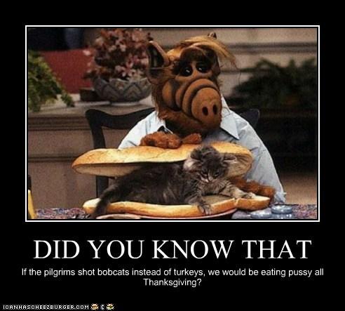 Cheezburger Image 6498501632