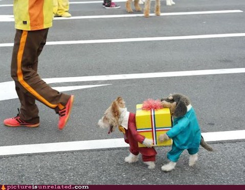 costume dogs pets present wtf - 6498538752