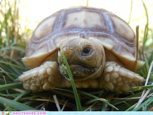 baby grass pet reader squee tortoise
