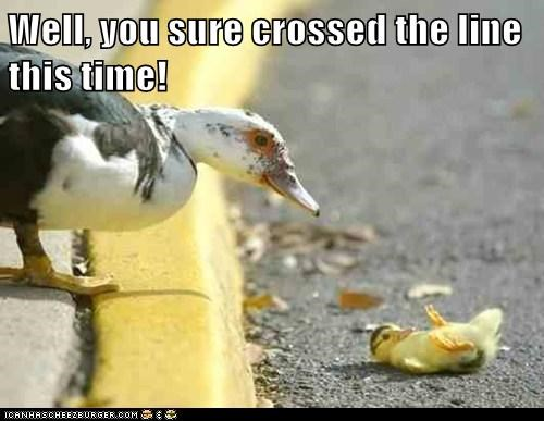 angry,crossed the line,duckling,ducks,fell,kids,parenting,road,street