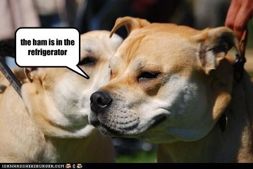 dogs figured it out ham refridgerators secret message what breed - 6499833344