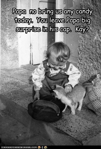 baby,hat,kid,kitten,toddler