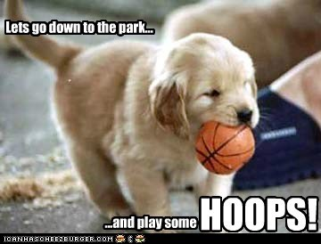 ball basketball dogs golden retriever hoops puppy - 6500019200
