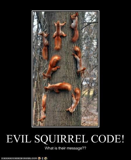 EVIL SQUIRREL CODE! - Cheezburger - Funny Memes | Funny Pictures