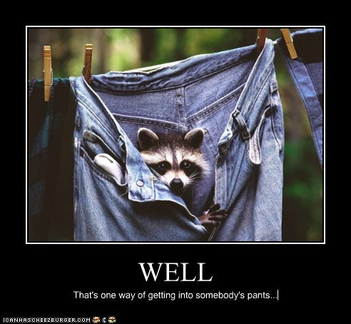 clothesline,expression,literal,one way,pants,raccoon