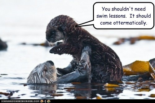 afraid,automatically,dont-need-them,hanging on,lessons,otter,pun,swimming