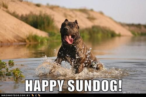 happy sundog,playing,smile,Sundog,tongue,water,what breed