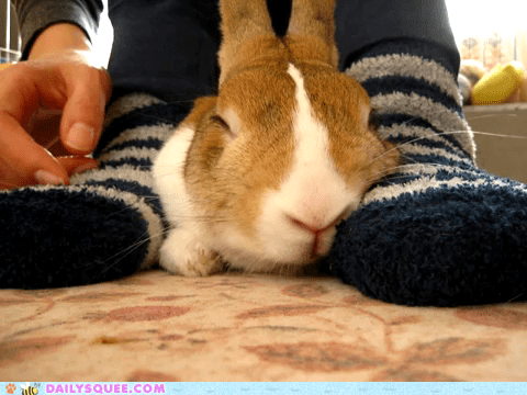 bunny cuddle happy bunday nap rabbit socks - 6501024256