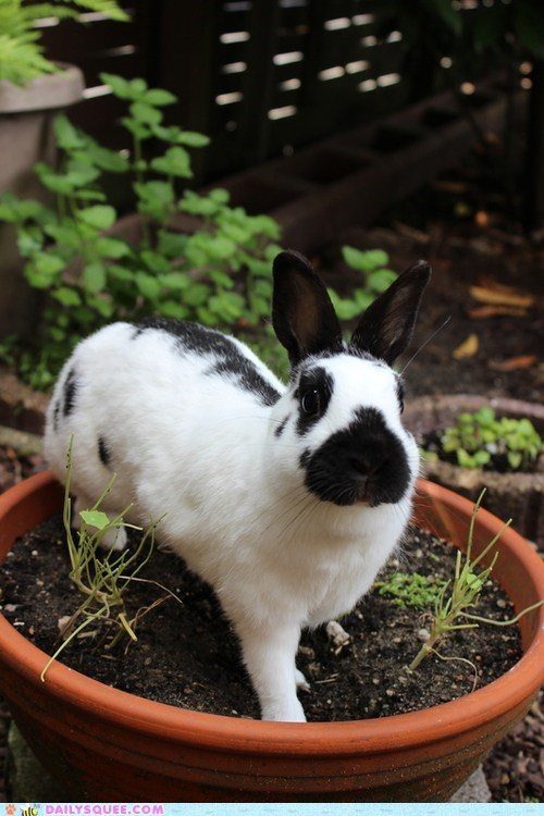 bunny,garden,happy bunday,potted plant,rabbit,spots