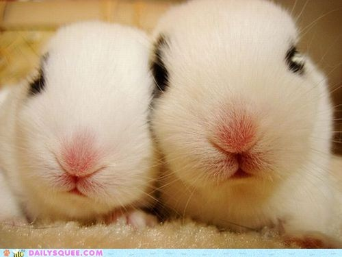 boopable bunny happy bunday noses pink rabbit - 6501037568