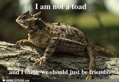 friends horny toad misconceptions texas horned lizard - 6501621248