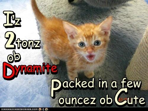 ynamite acked in a few ouncez ob ute I 2 tonz z ob P C I Z , , 2 tonz ob D D ynamite acked in a few ouncez ob ute C P n n