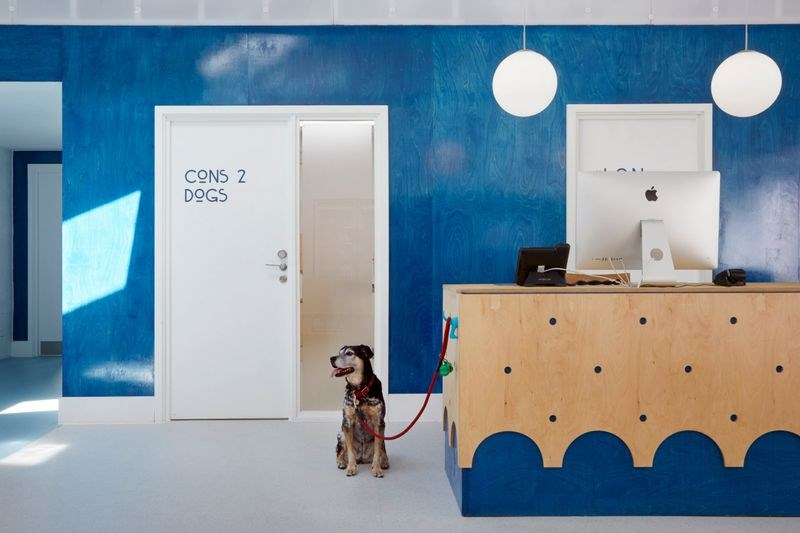 dogs hospital London design stress vet Cats animals - 6502149