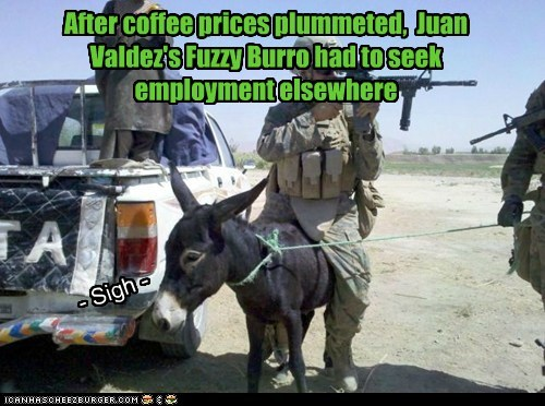 After coffee prices plummeted, Juan Valdez's Fuzzy Burro had to seek employment elsewhere - Sigh -