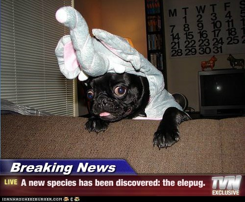 Breaking News,costume,dogs,elephant,new species,pug