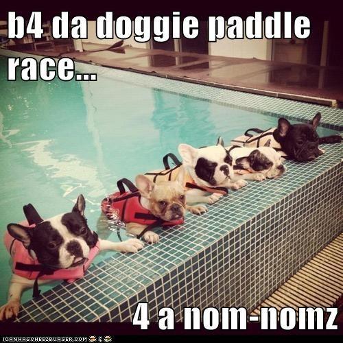 b4 da doggie paddle race...  4 a nom-nomz